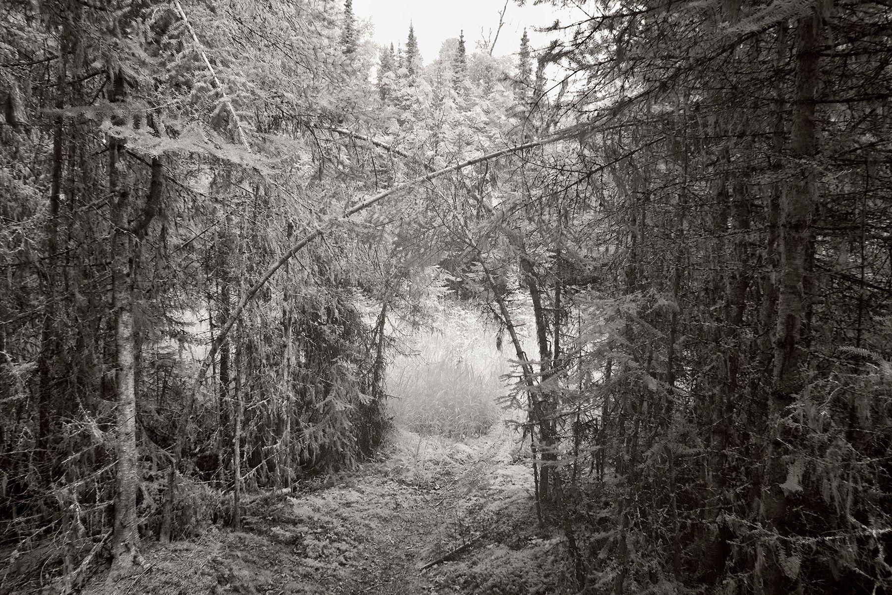 Meadow's_Arch.jpg