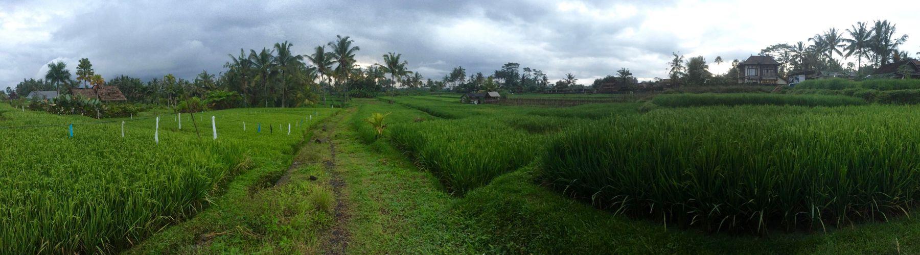 Tegalalang Rice Fields, Ubud, Bali, Indonesia