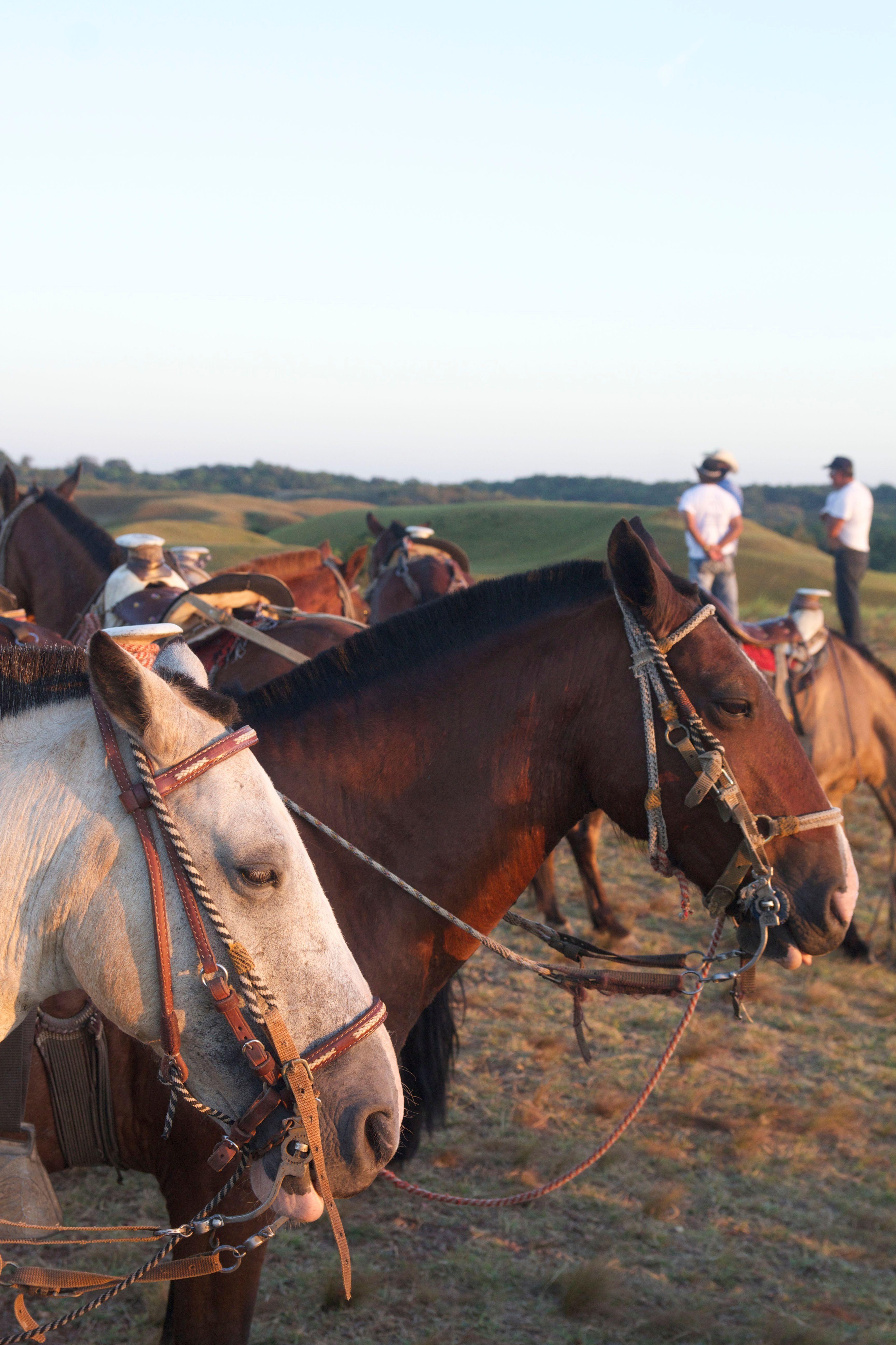 Horseback_LanosDeMenegua_IMG_3665.jpg