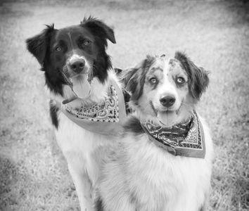 Rocky & Zorro