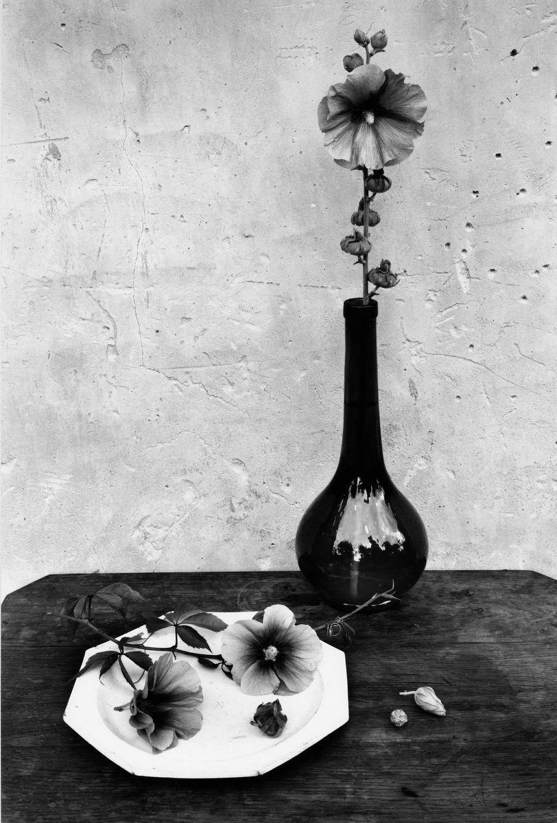1les_roses_tremieres_1960.jpg