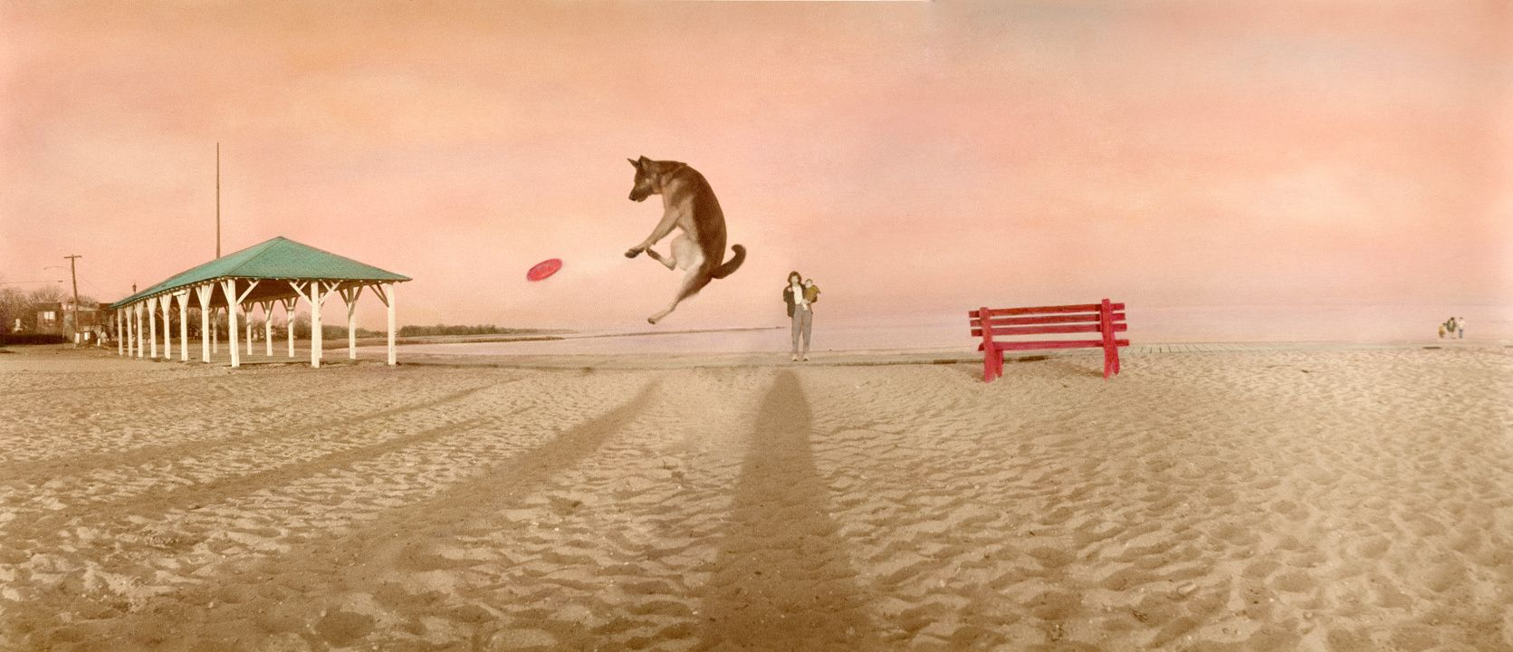 1who_threw_the_dog.jpg