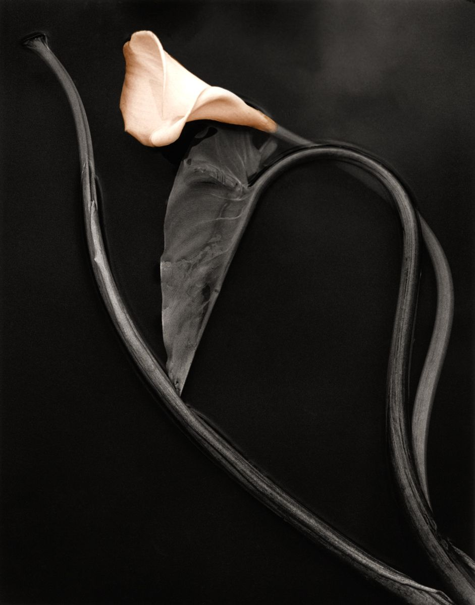 calla with heart