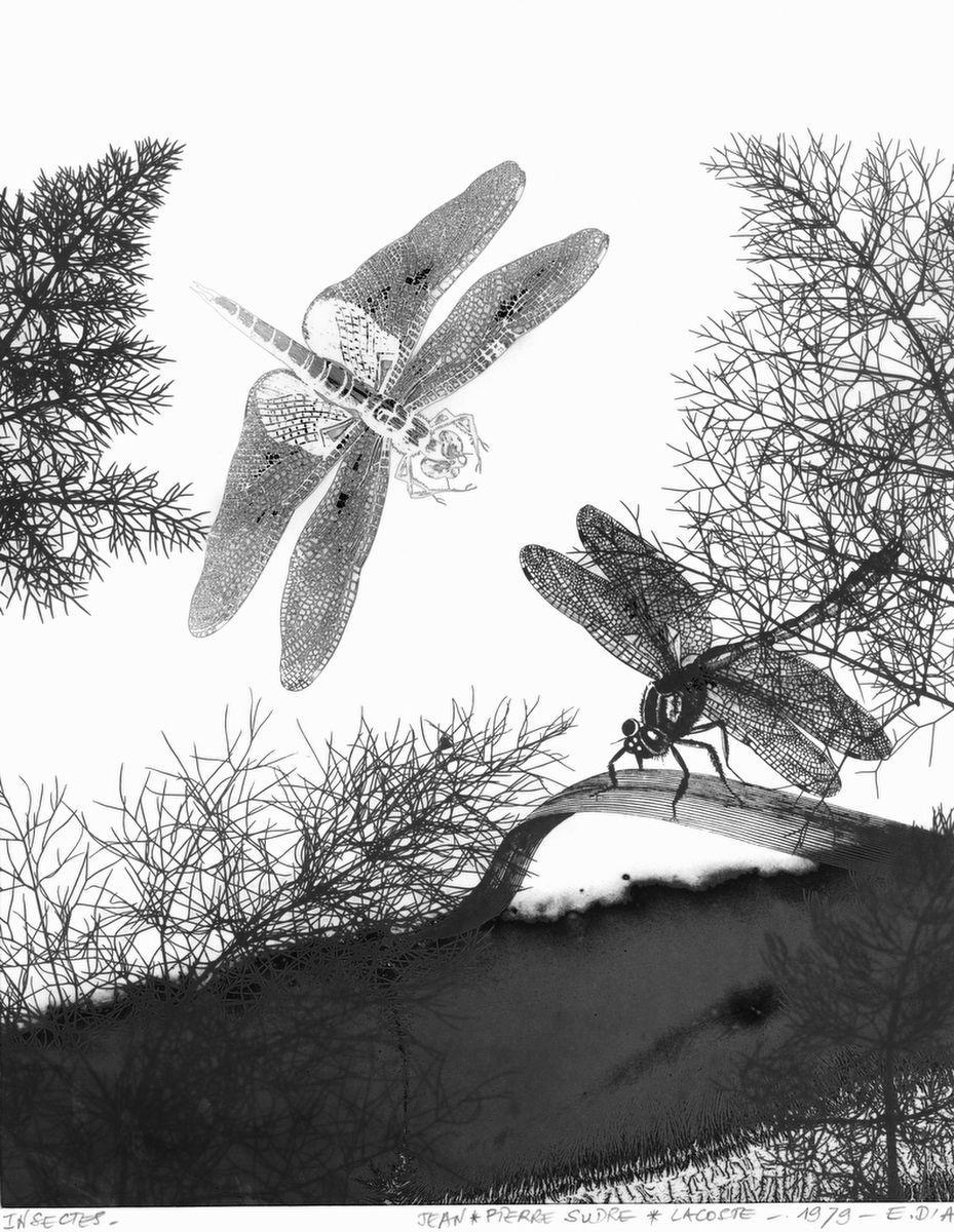 1sudre_insectes__1979_j.jpg