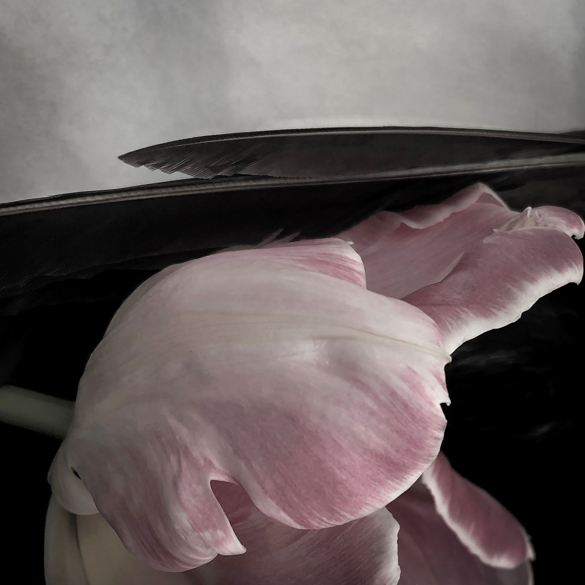 See of Possibilities_Tulip Abstraction #1.jpg