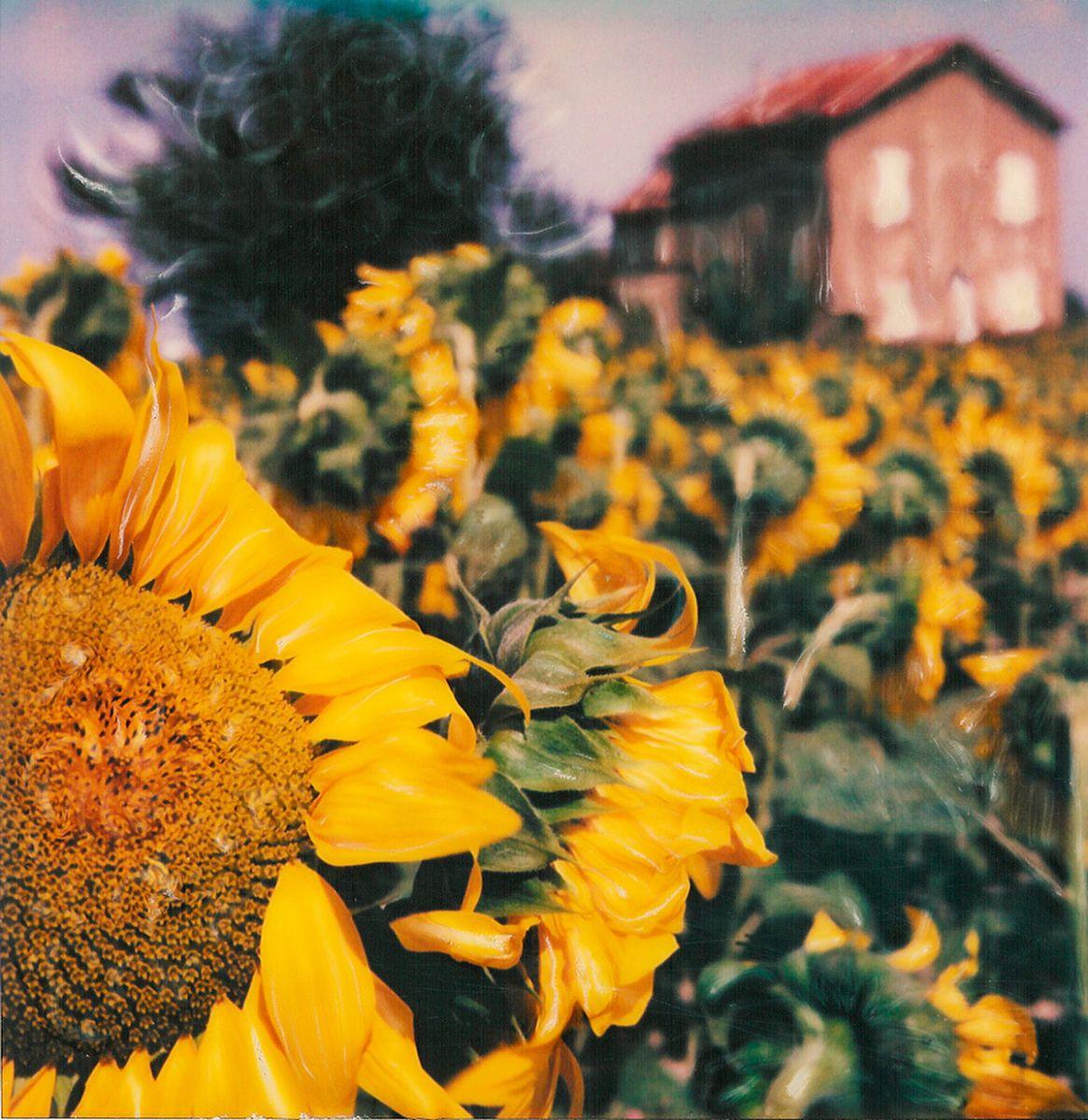 1013sunflower_house.jpg