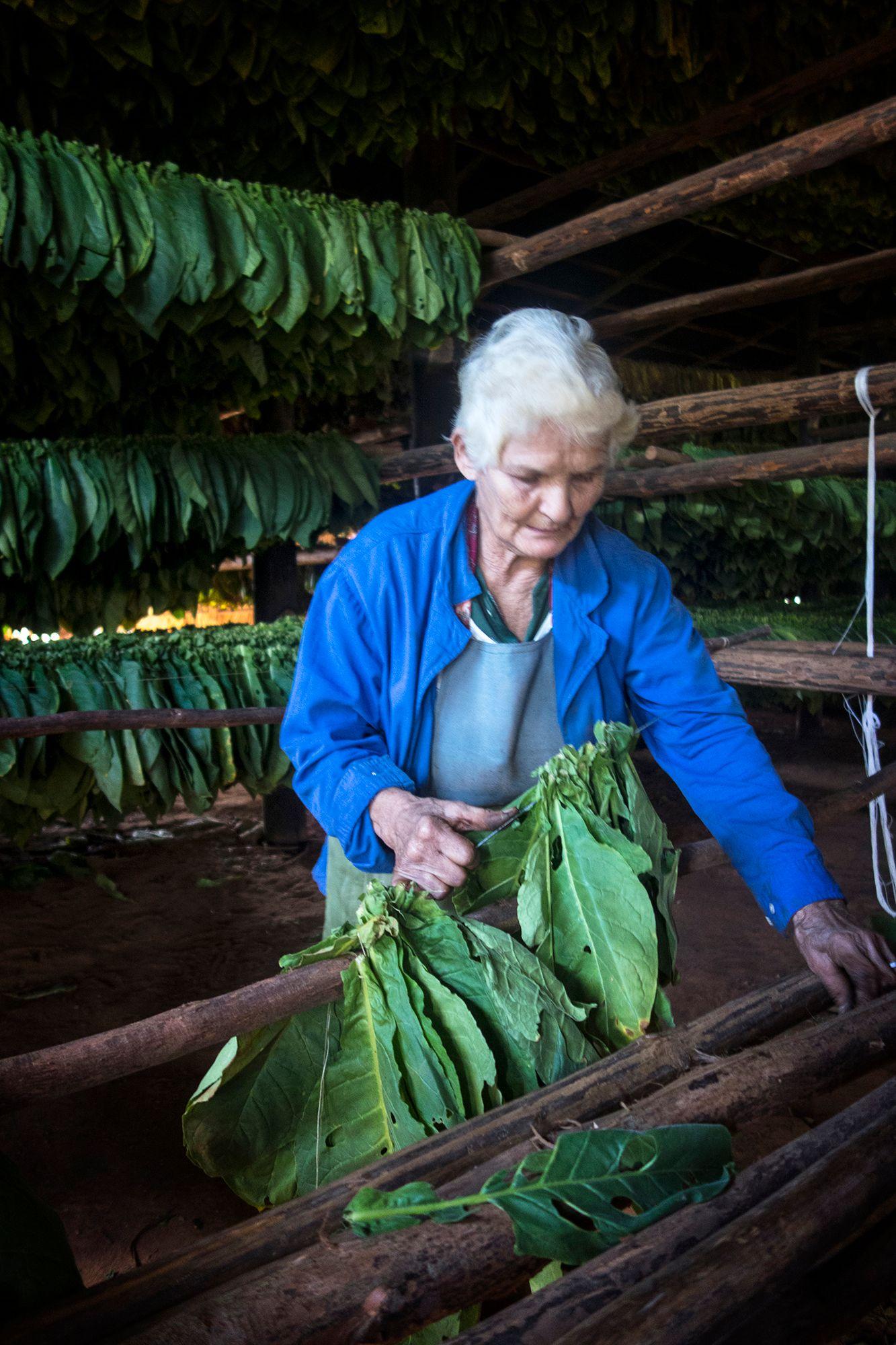 ©opalenik2013_Vinales tobacco worker.jpg