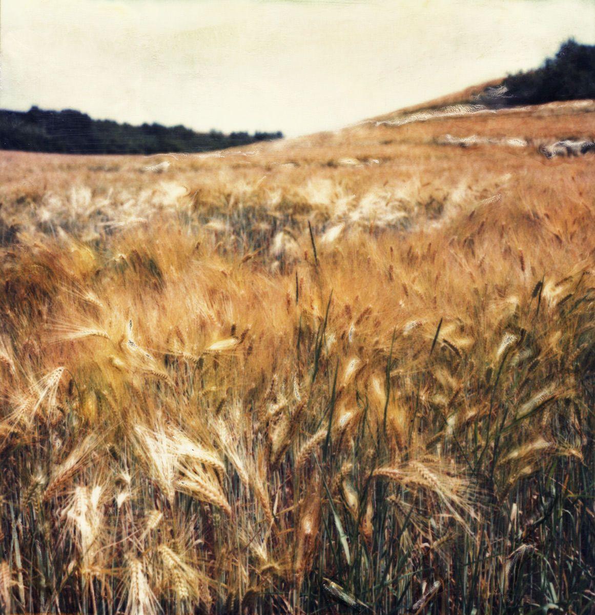 100708__opalenik_wheat_fields.jpg