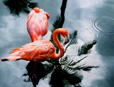 1LB_Flamingo.jpg