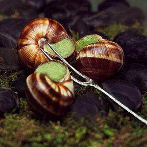 1LB_Snails.jpg