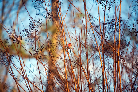 1LB_Redbird.jpg