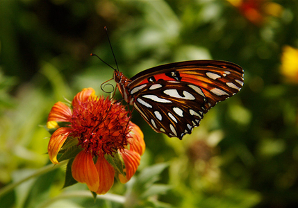 1LB_Butterfly.jpg