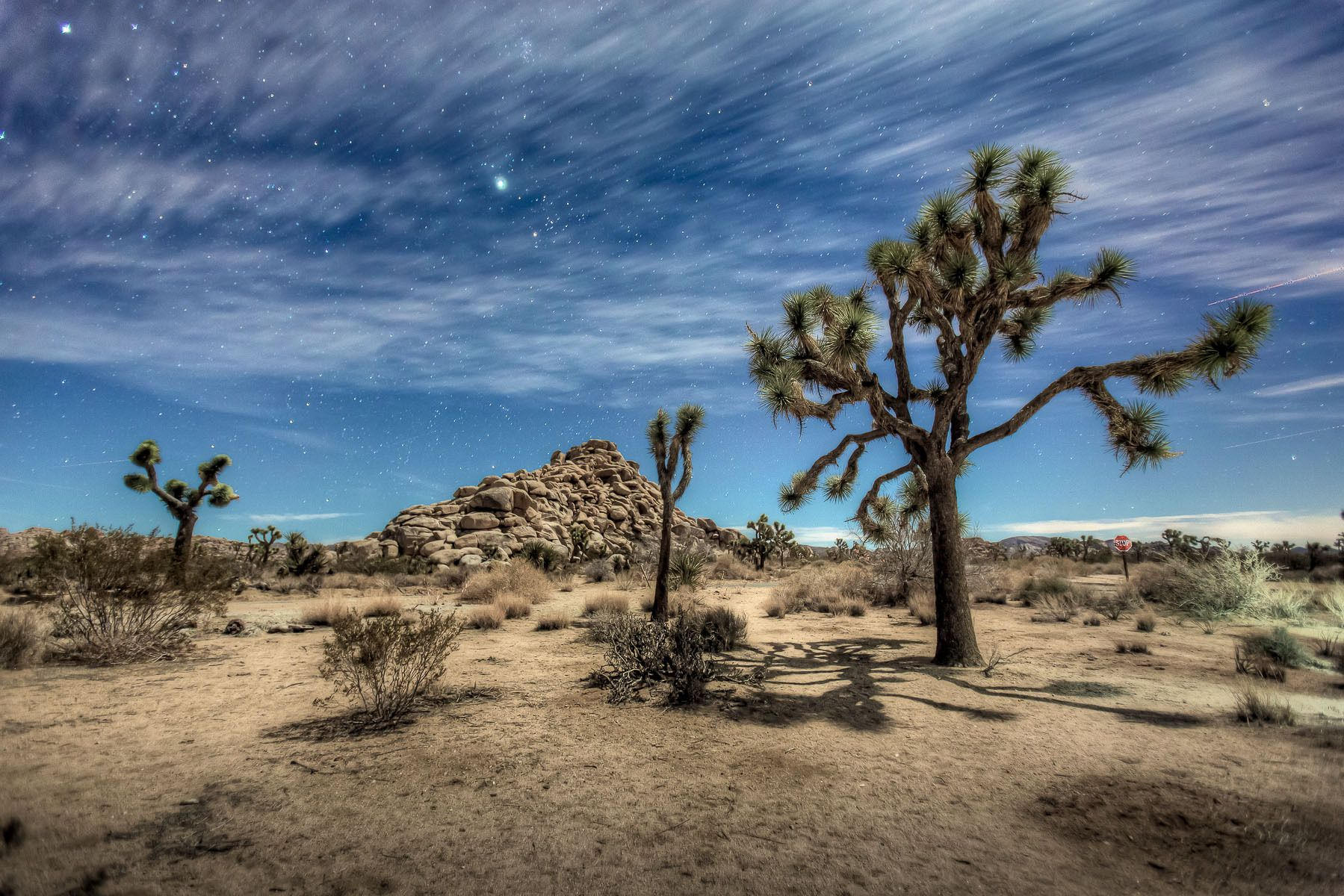 Joshua Tree by moonlight