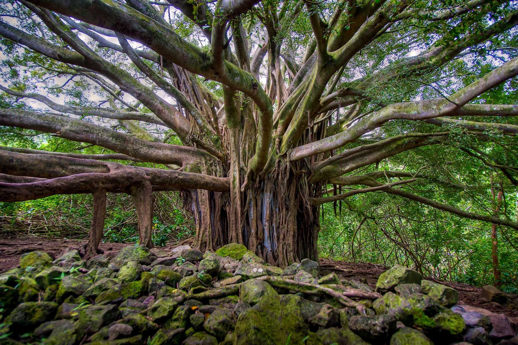 1hawaii_2012_8877hdr.jpg