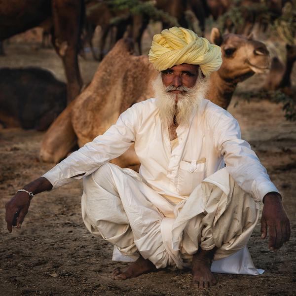 Man squatting with camels.jpg