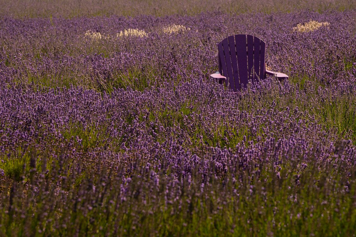 Lavender Buried Chair