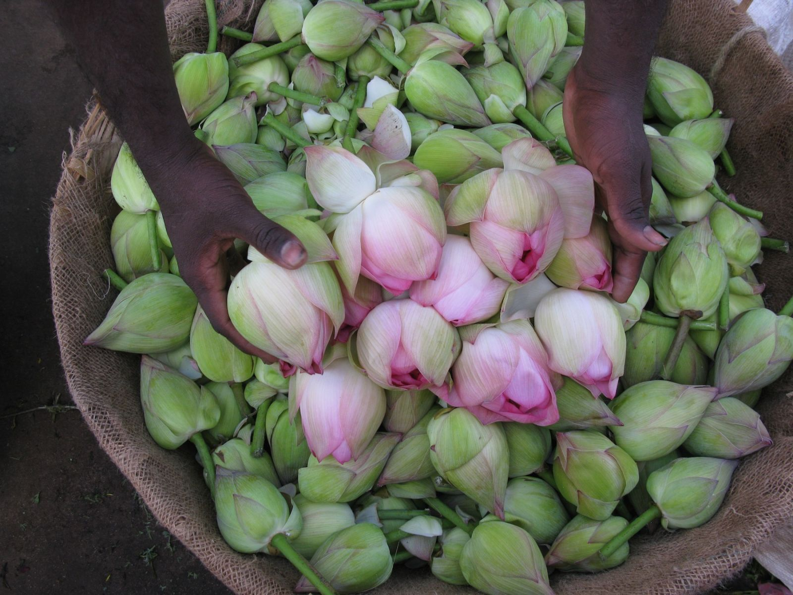 flowers in India