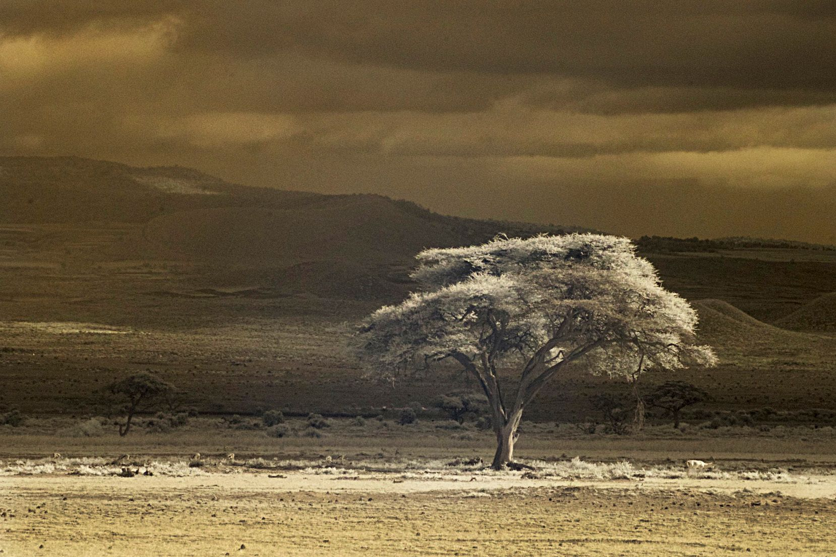 Magic light tree