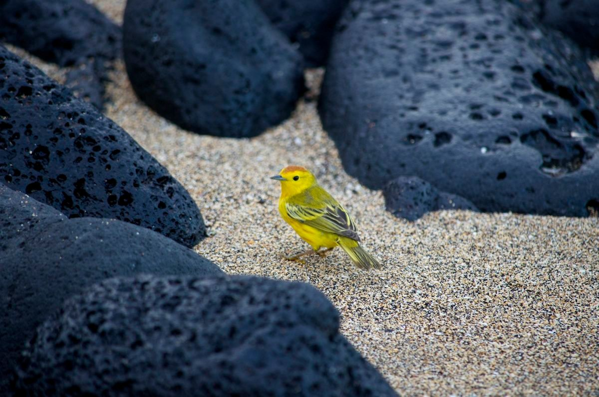 picture of yellow bird