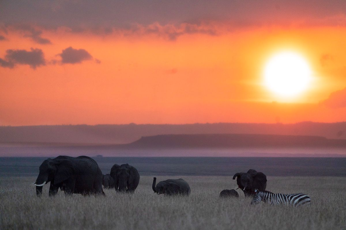 Elephants and zebra at sunset