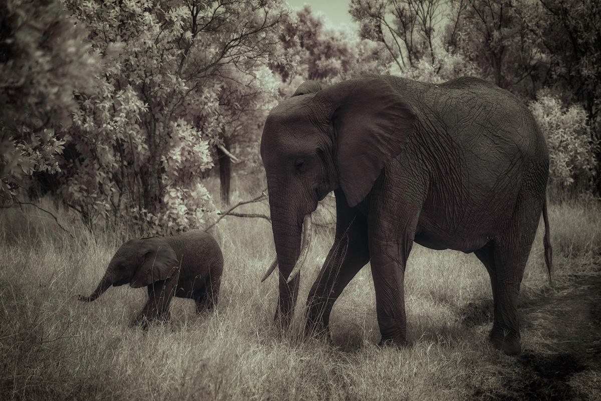 Mom and baby elelphants