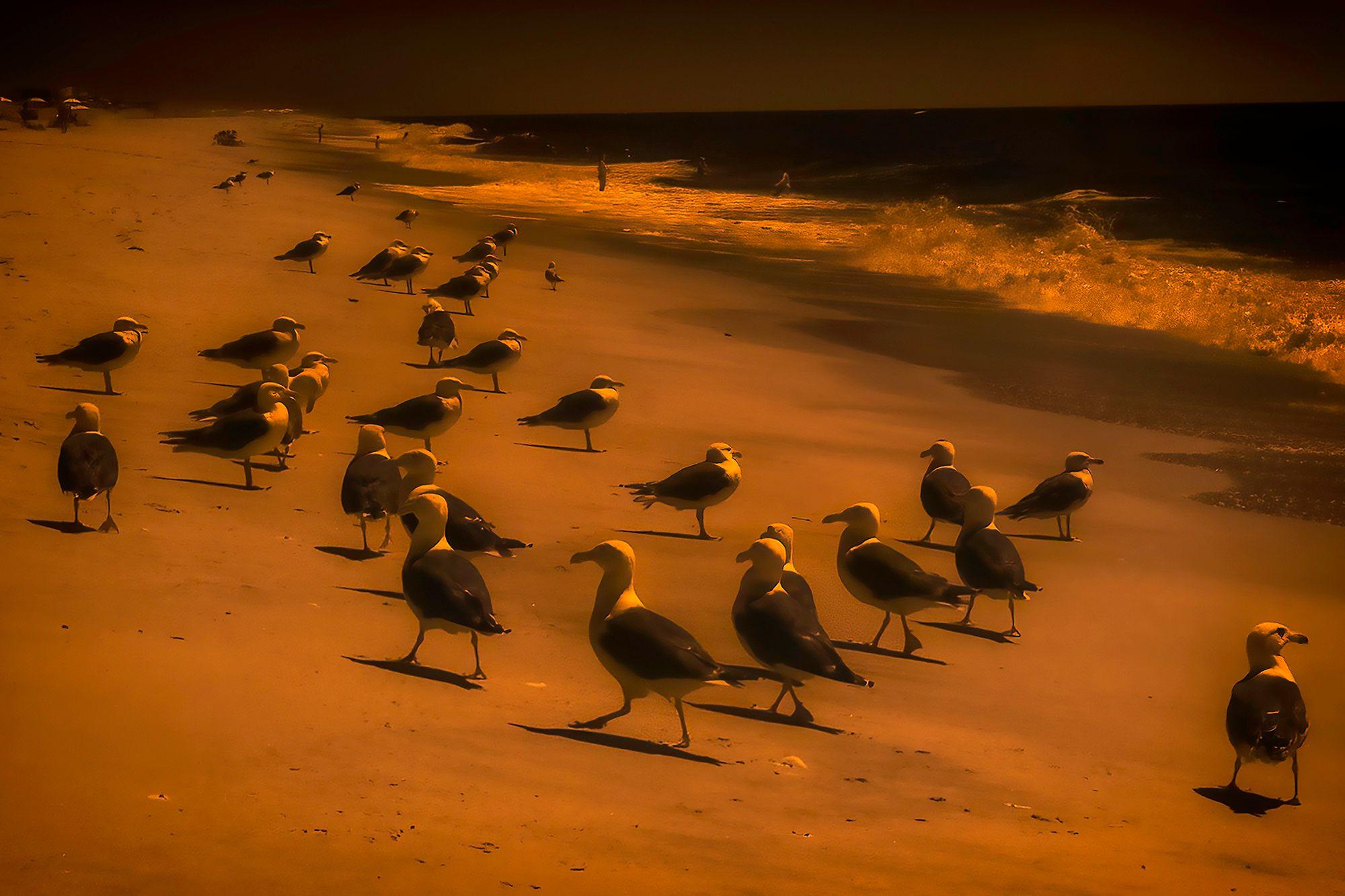 Shimmering Seagulls