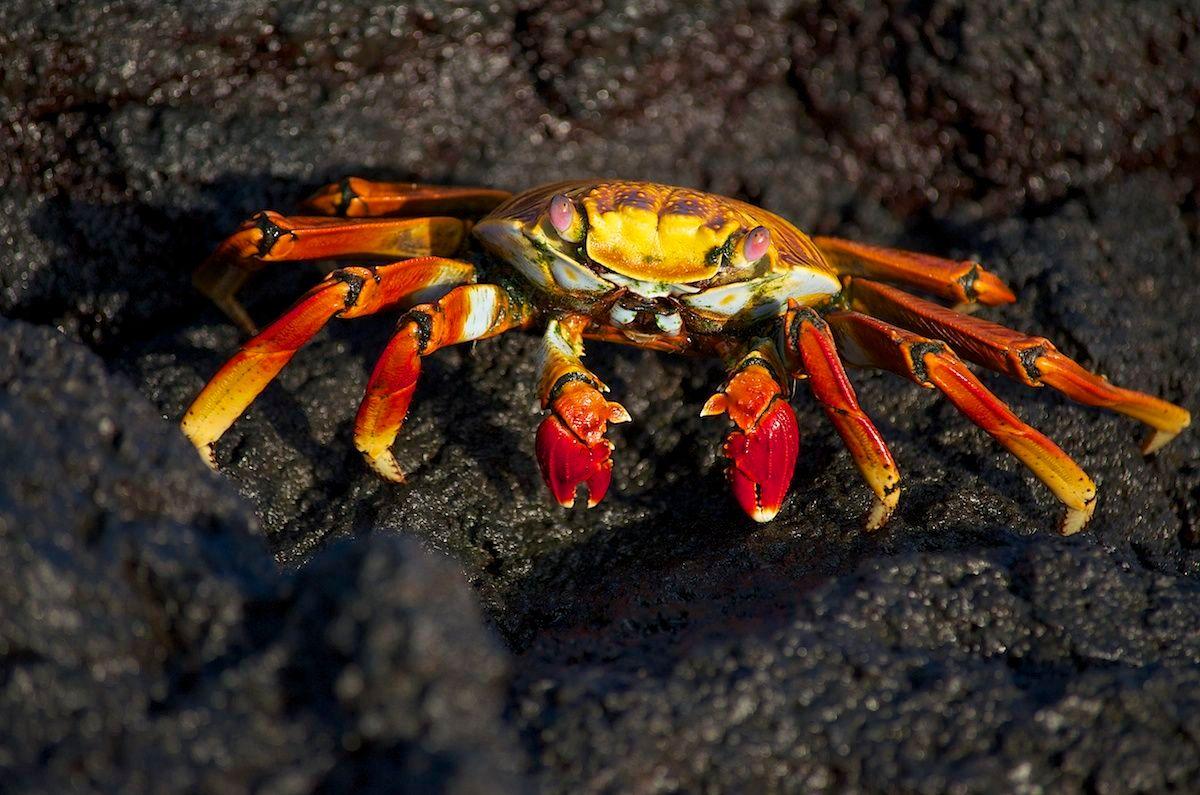 crab pictures