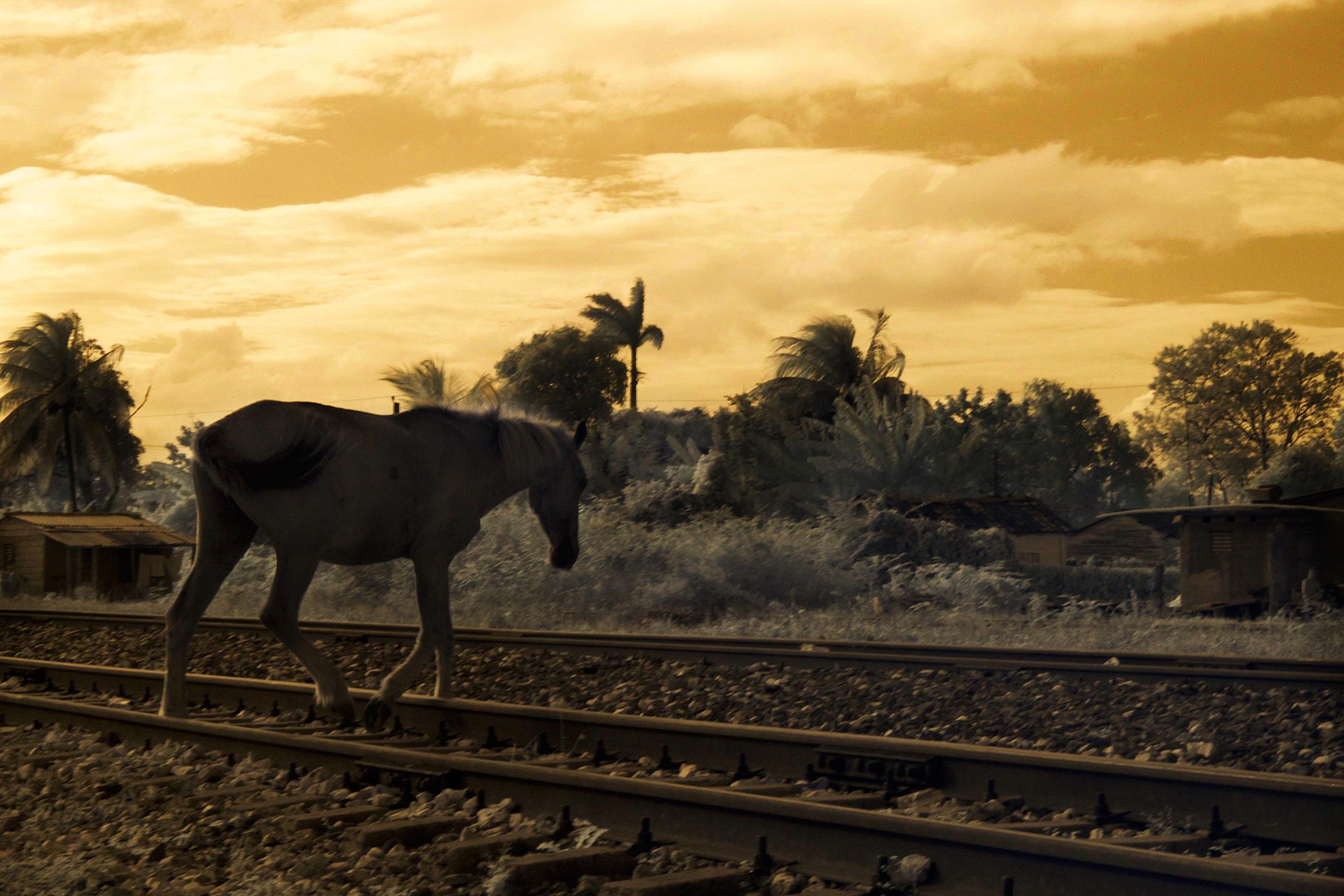 Horse on the railroad tracks