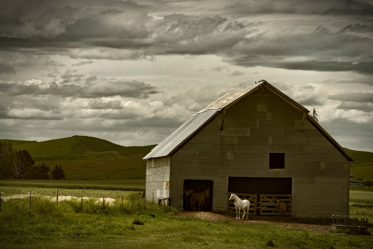 White Horse with Barn