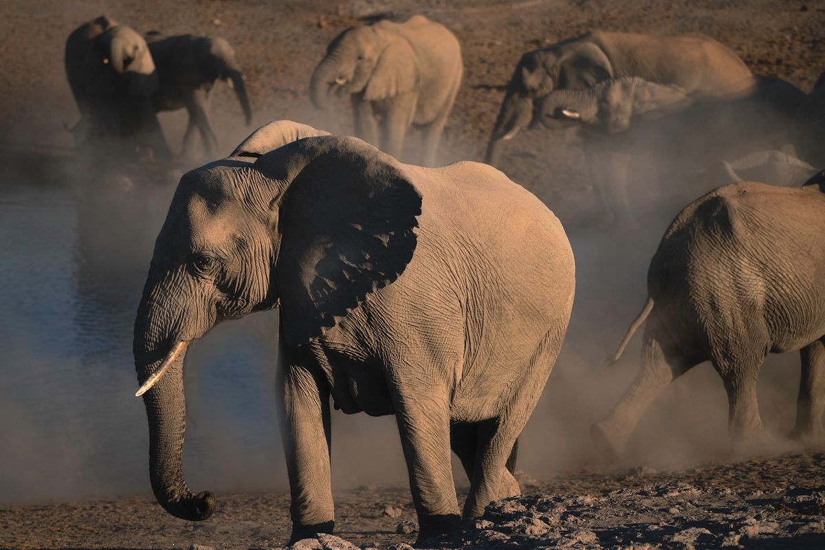Elephants and Dust