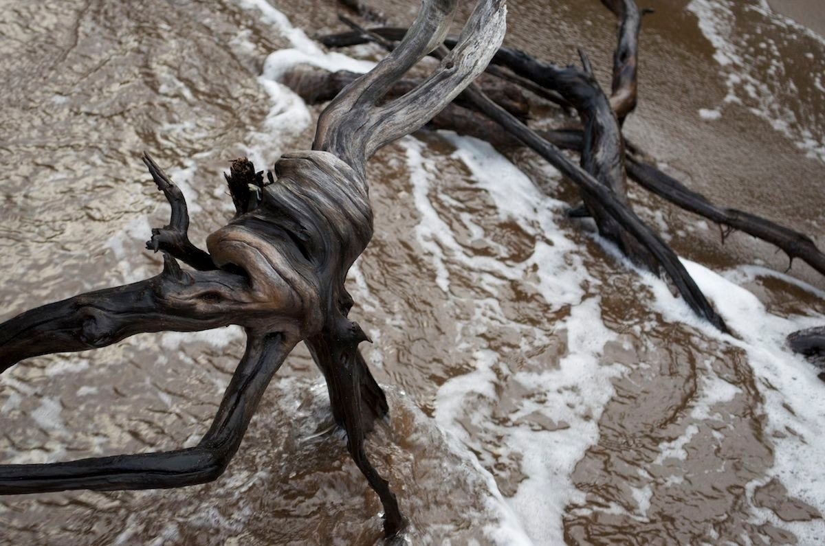 driftwood images