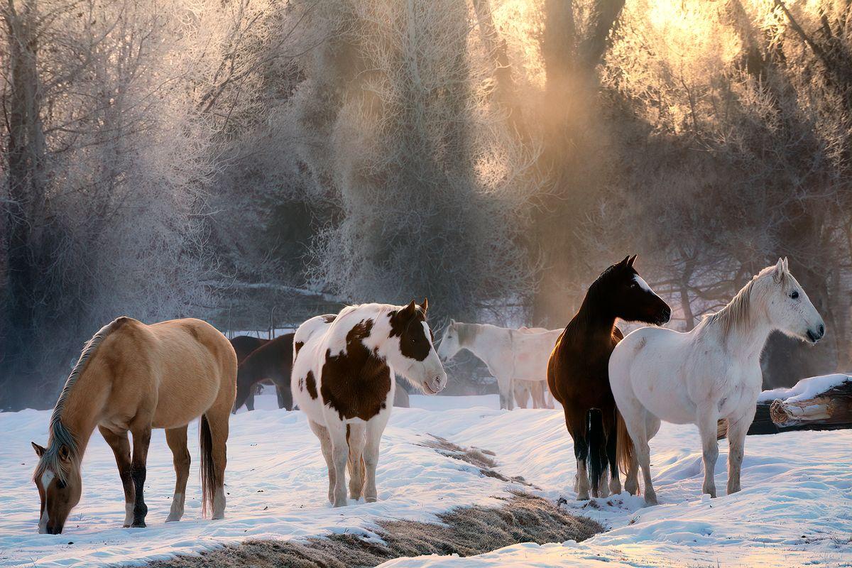 Backlit Horses
