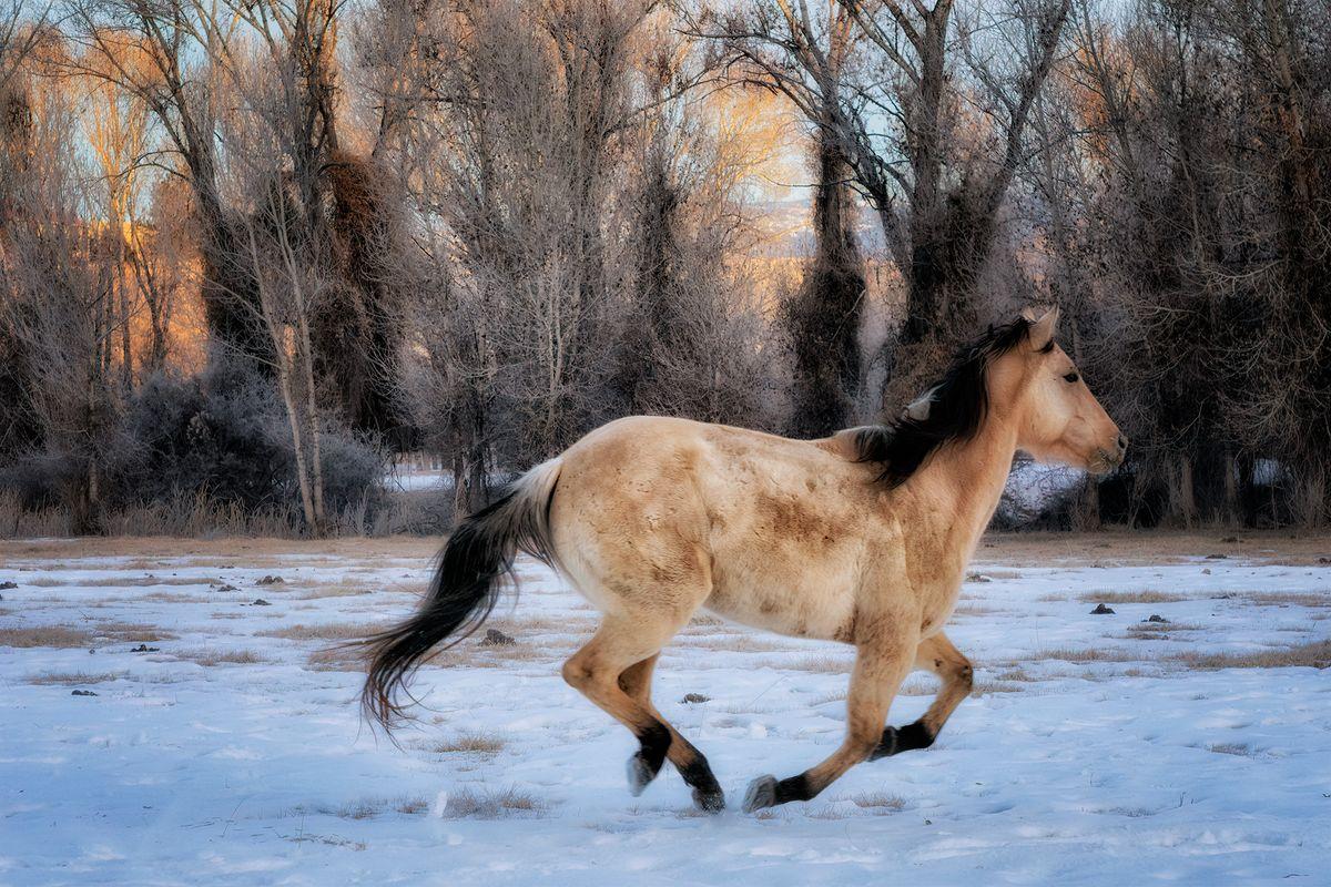 Running Horse.jpg