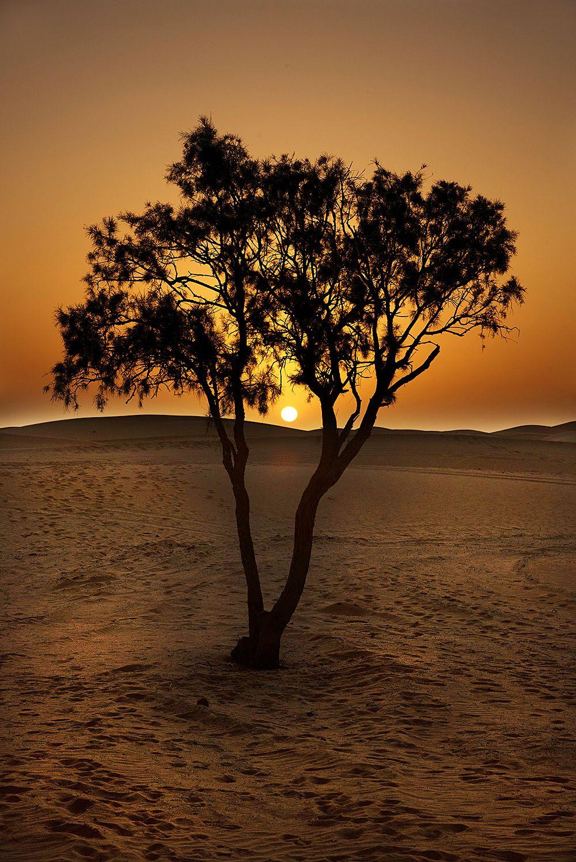 Sahara tree
