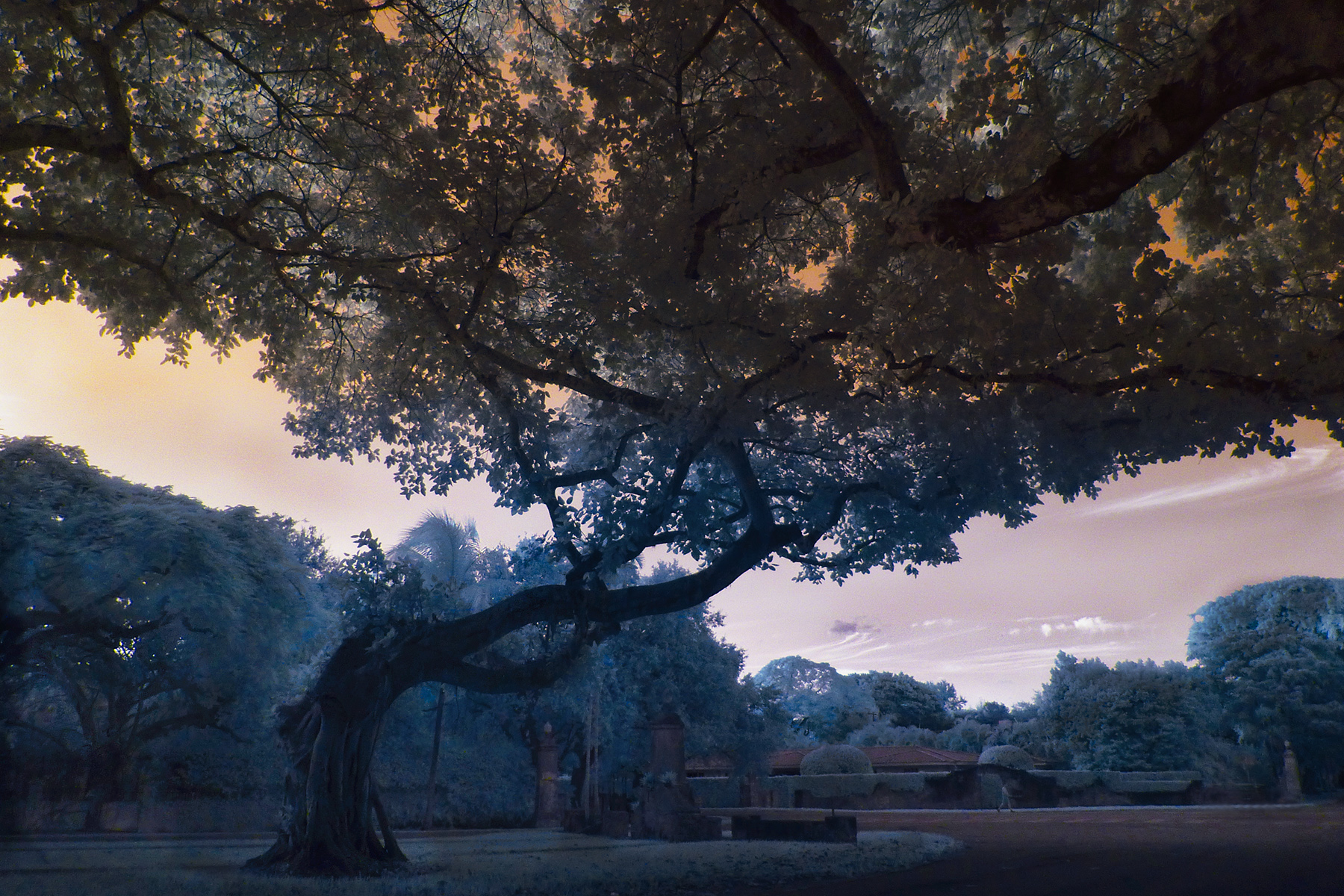 beautiful old trees