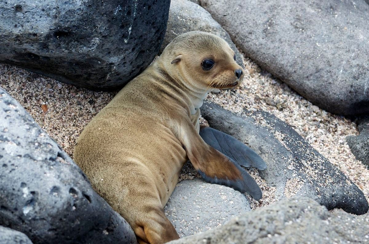 baby seal photos