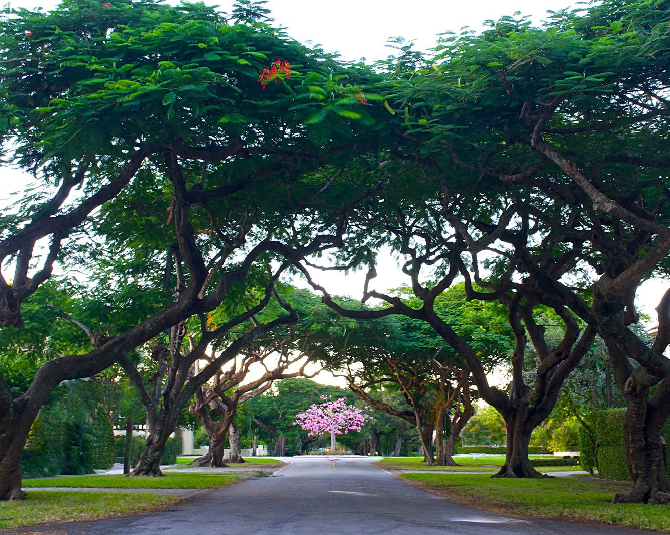 picures of Coral Gables