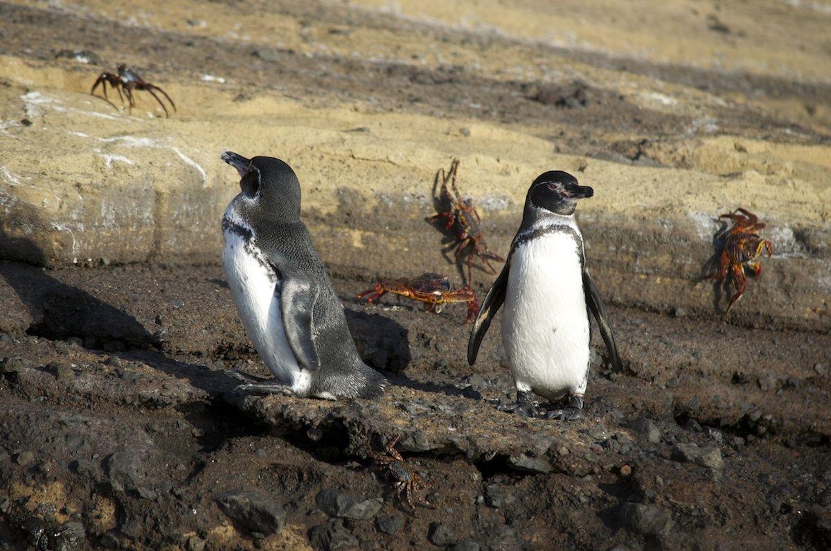 penguin images
