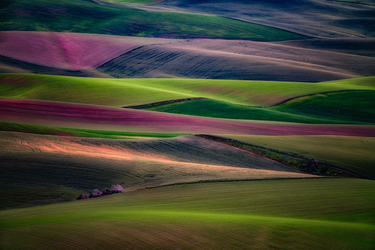 Steptoe Colors