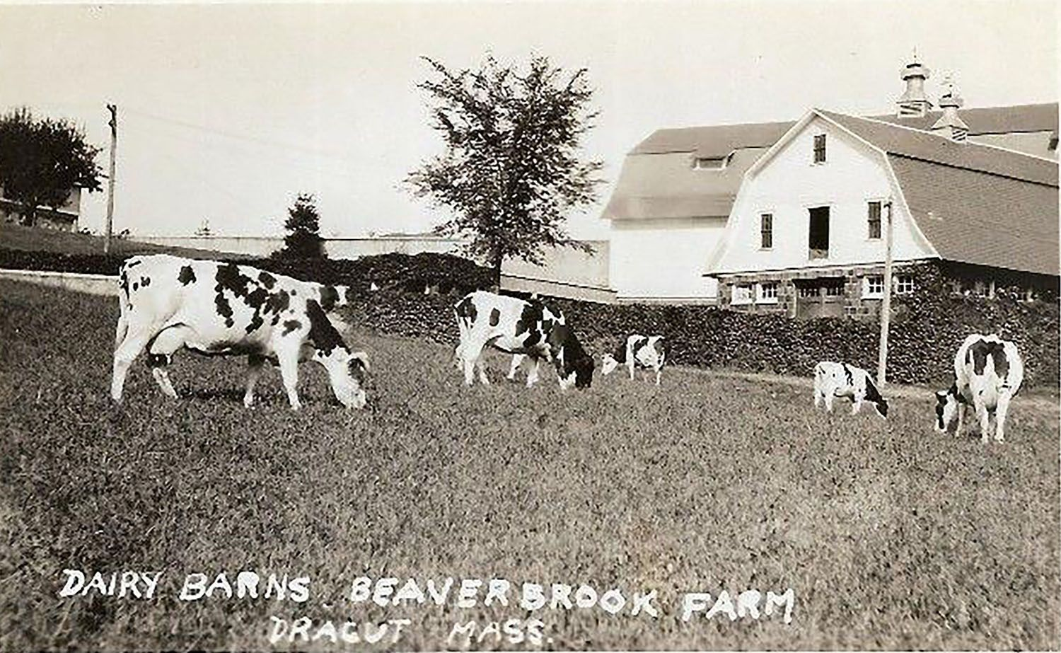 Beaverbrook Farms - edit.jpg