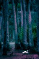 Blue Mood Swamp