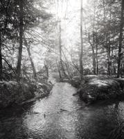 Daniel Boone Forest