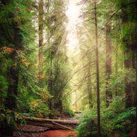 Hiking trail theough California Coast forest