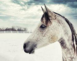 Horse in winter field