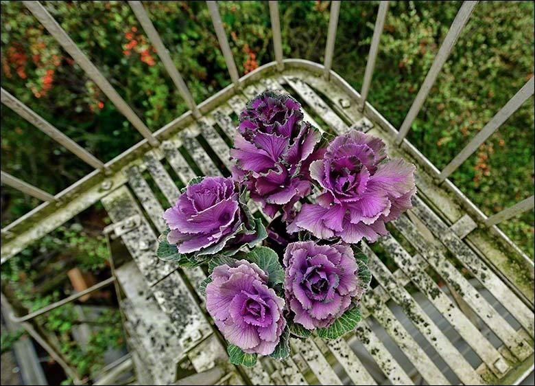 Flowers On Christine's Fire Escape