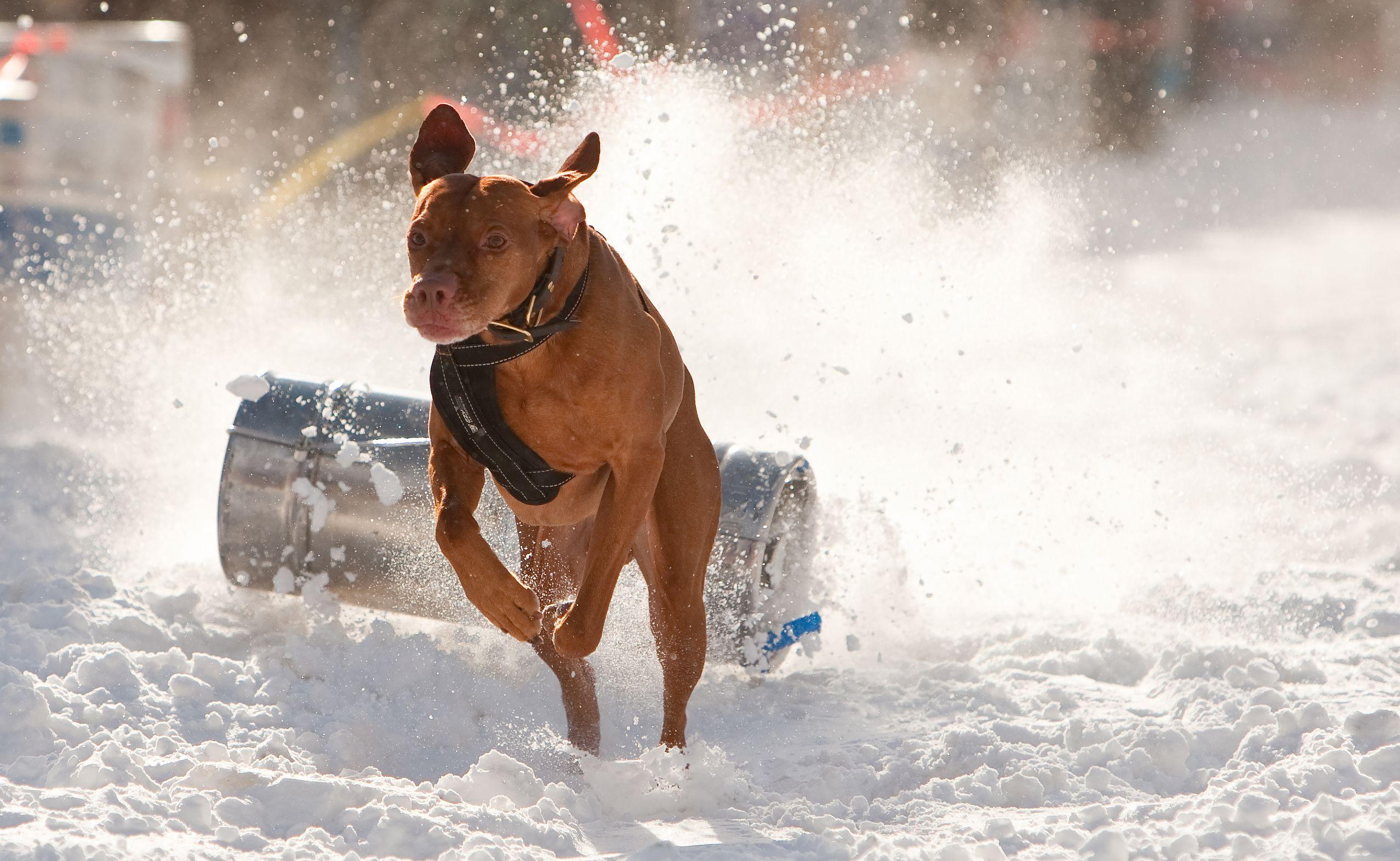 dog_keg_pull.jpg