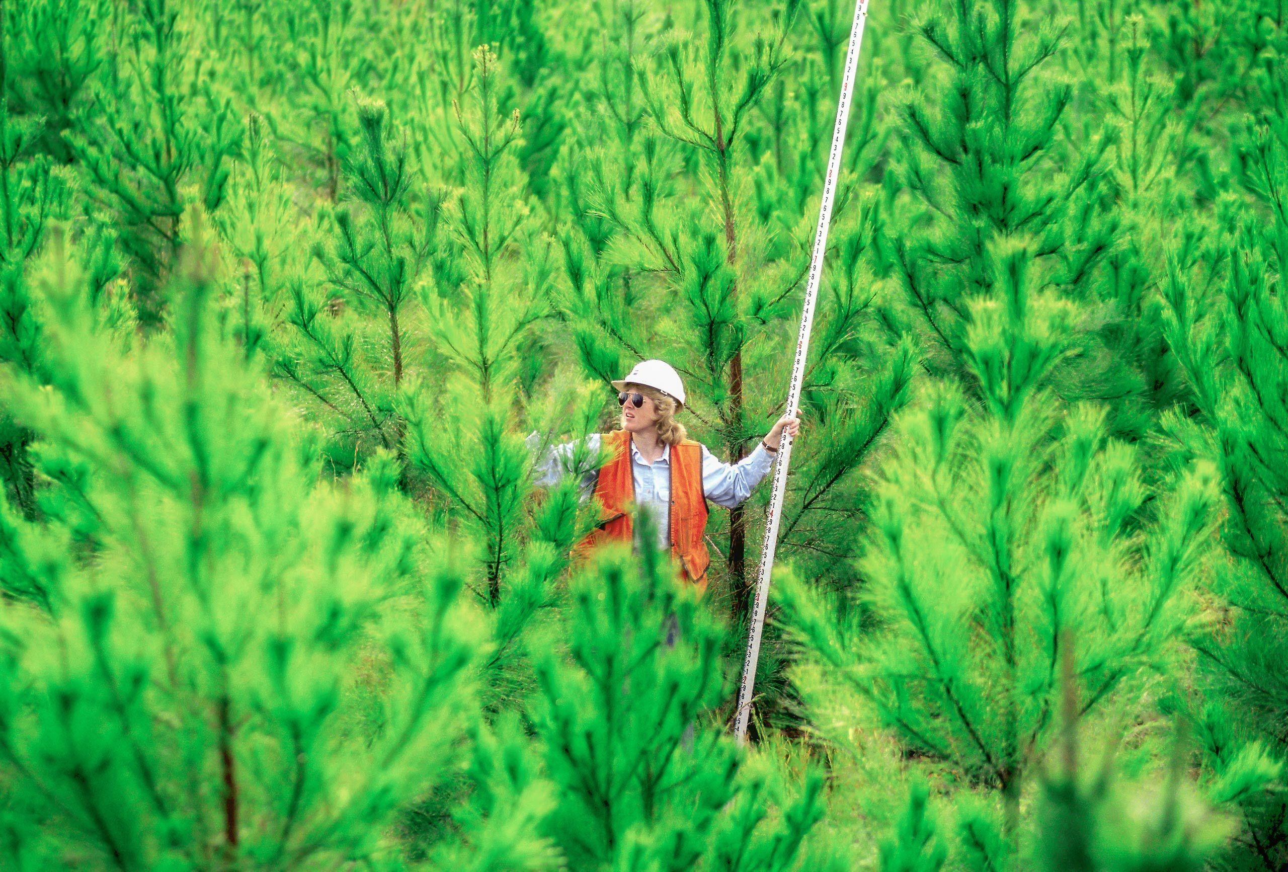 0009Roger_Tully_pine_nursery2000-Edit.jpg