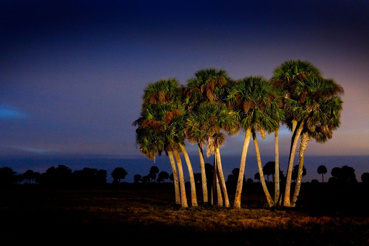 Palm Grove. Melbourne, Florida