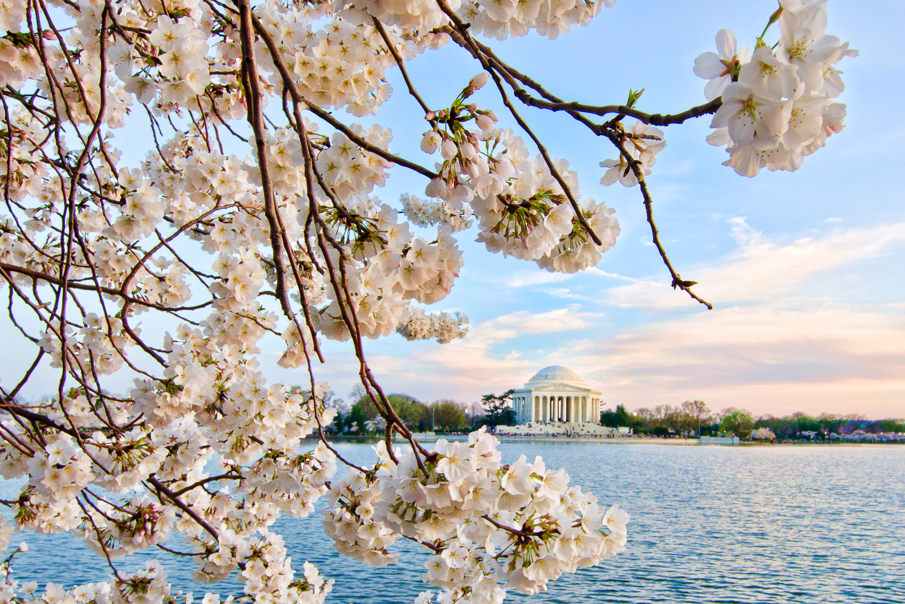 Cherry Blossom Time in Washington, DC