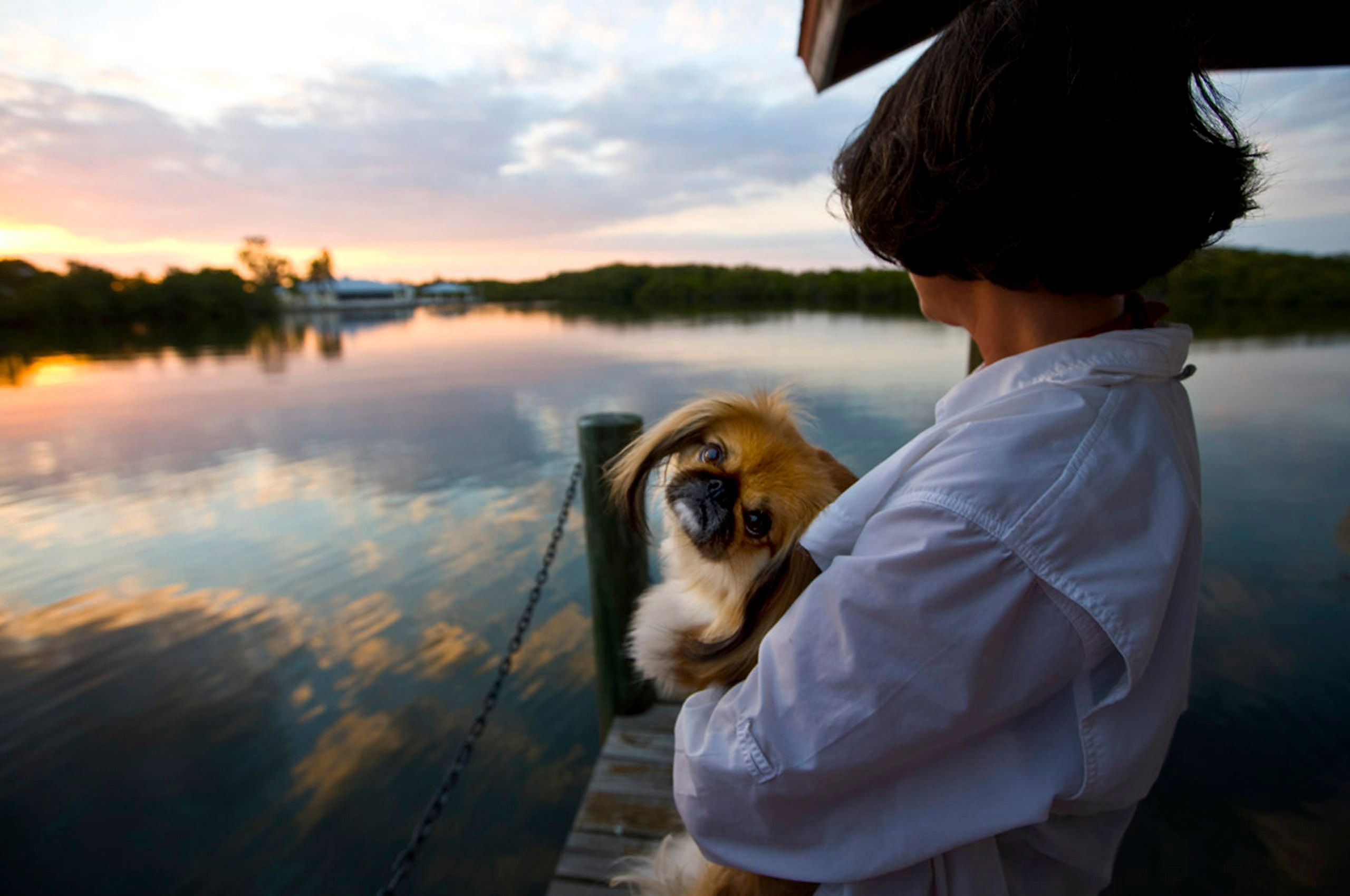 Tibetan spaniel and owner on dock